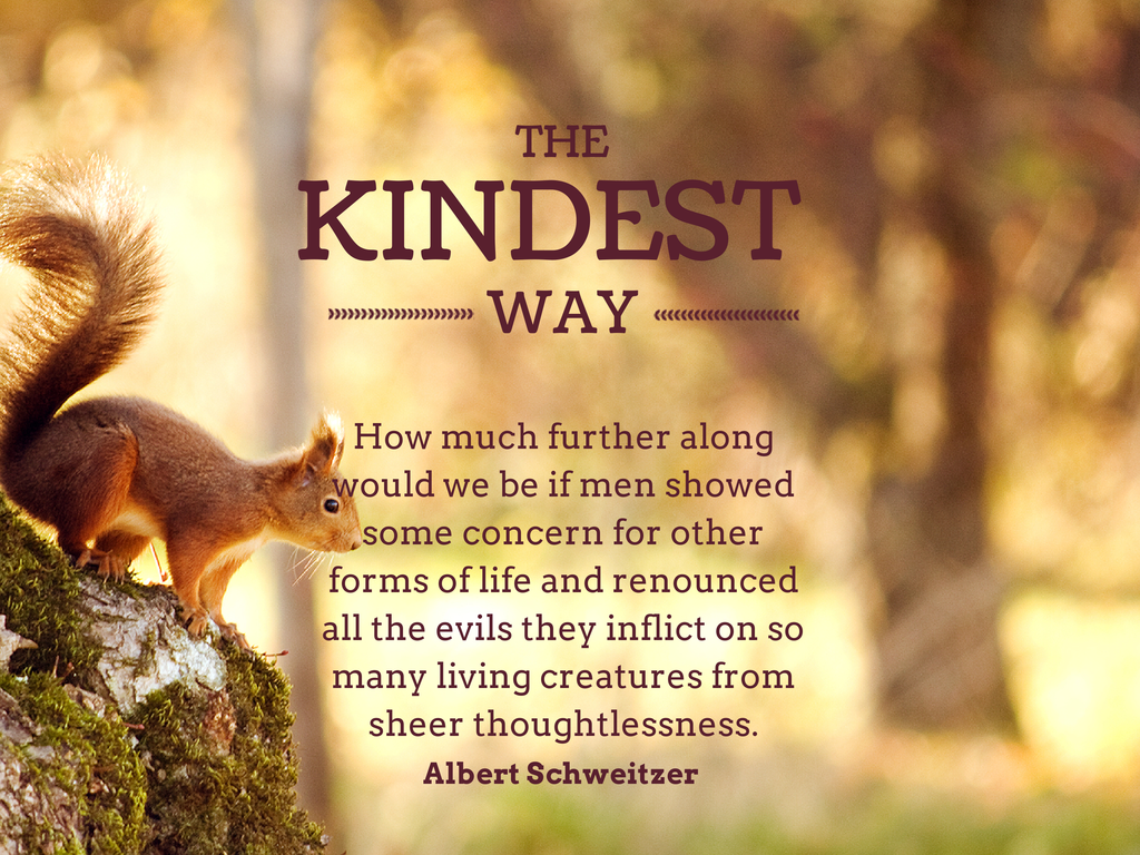 Short essay on kindness to animals